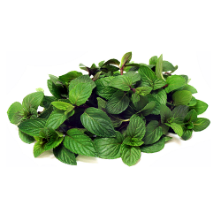 mint-leaves-fudino